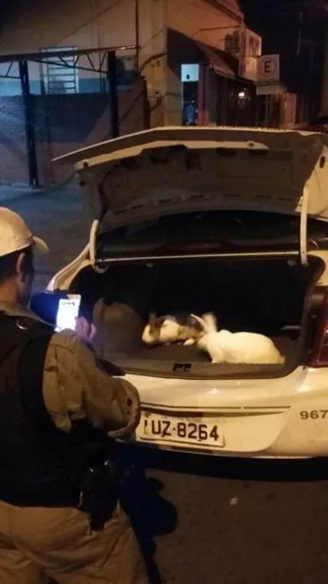 Rapaz preso após sequestrar coelhos disse que ia trocar animais por pedras de crack, em Venâncio Aires, RS