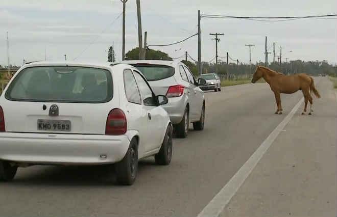 Convênio é criado para recolher animais soltos e evitar acidentes na BR-392 no RS