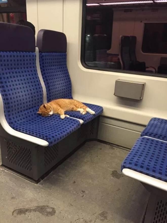 Gato de rua exausto cai no banco do metrô na Alemanha