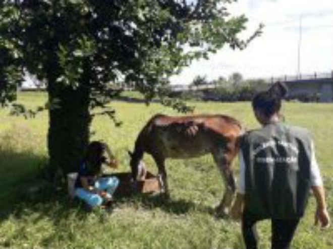 Cavalo vítima de maus-tratos é resgatado em Balneário Camboriú, SC