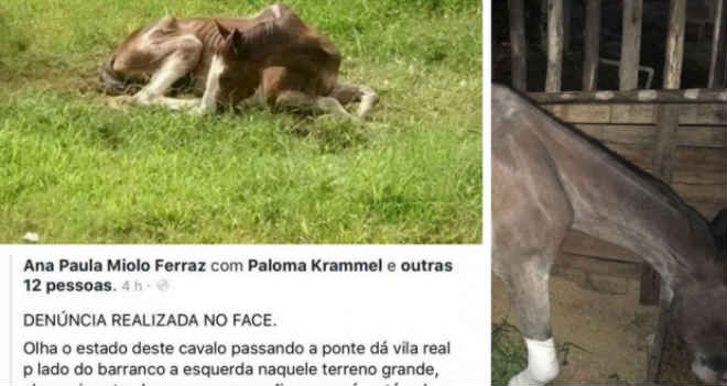 Mobilização no Facebook ajuda salvar cavalo vítima de maus-tratos em Balneário Camboriú, SC