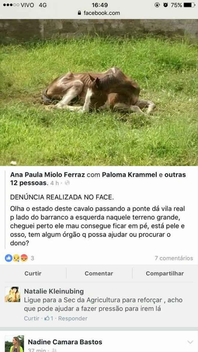 Homem é autuado por maus-tratos a cavalo em Balneário do Camboriú, SC