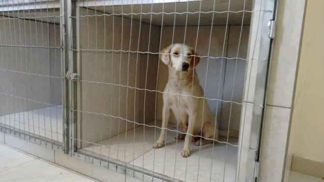 Mutirão de castração de cães e gatos ocorre neste sábado em Içara, SC