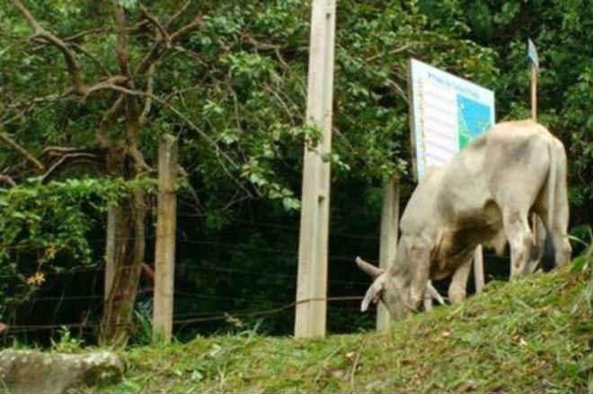Polícia prende três suspeitos de organizar farra do boi em Porto Belo, SC