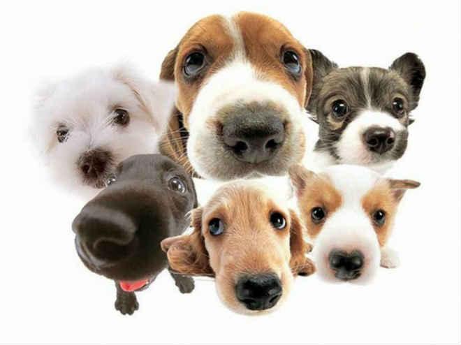 Projeto que cria Conselho de Proteção Animal é aprovado na Câmara de São João Batista, SC
