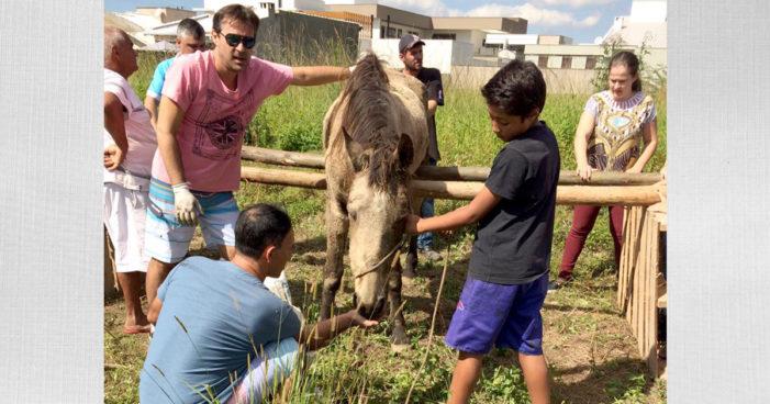 Voluntários resgatam animais abandonados em Tubarão, SC