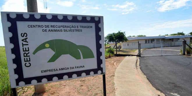 Serviço para animais resgatados deixa de atender em Araçatuba, SP