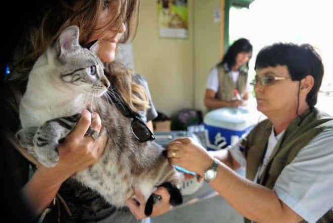 Vereadores pedem a construção de hospital veterinário e pronto-socorro para animais em Barueri, SP
