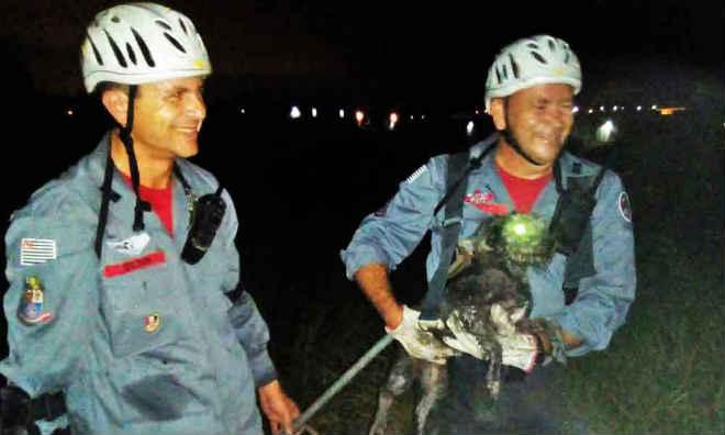 Após duas horas, bombeiros resgatam cachorro em galeria de esgoto em Caçapava, SP