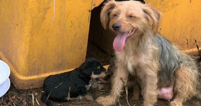 Campinas (SP) tem cerca de 20 mil animais nas ruas, diz Prefeitura