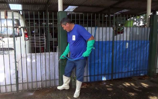 Prefeitura de Campinas (SP) entra em 2 casas onde militar mantinha dezenas de cães e gatos para limpeza