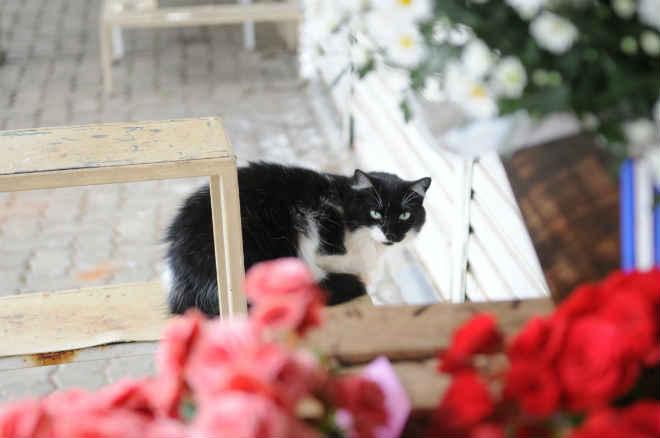 Setec investiga a morte de dez gatos no Cemitério da Saudade, em Campinas, SP