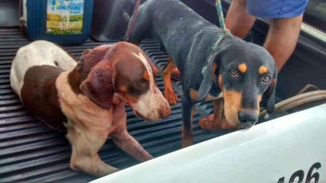 Polícia Ambiental flagra caçador em Canitar, SP