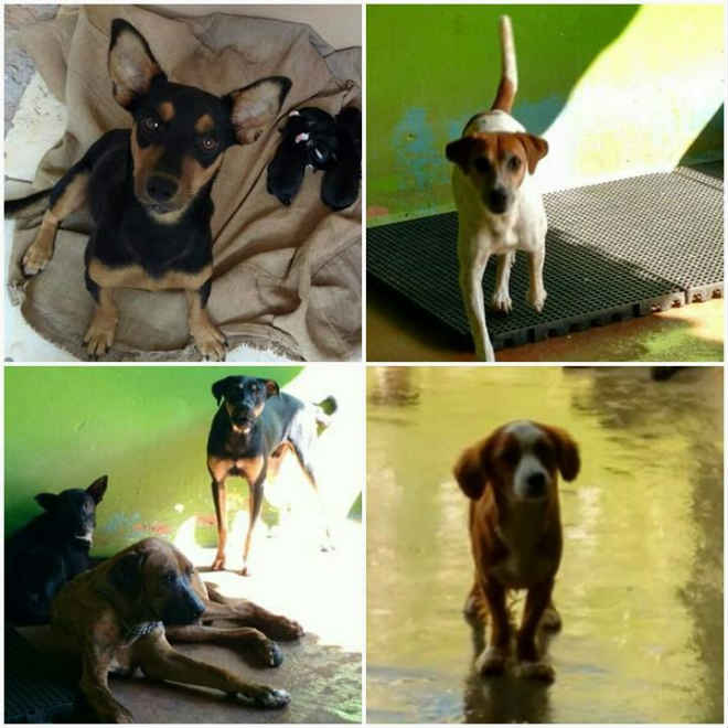 CCZ de Fernandópolis (SP) tem cerca de 100 animais disponíveis para adoção