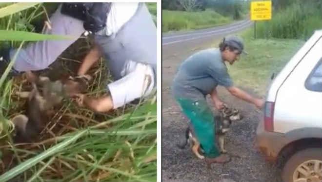 Policiais socorrem cachorro amarrado em matagal; assista