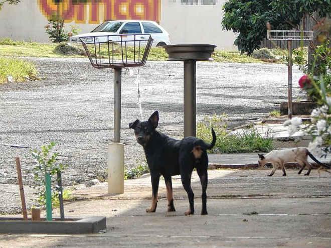 Apaja recolhe 4,3 mil animais vítimas de maus-tratos em Jaú, SP