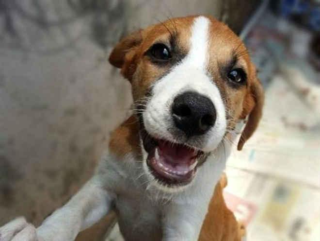 Limeira (SP) realiza feira de adoção de cães e gatos durante o feriado prolongado do Dia do Trabalho