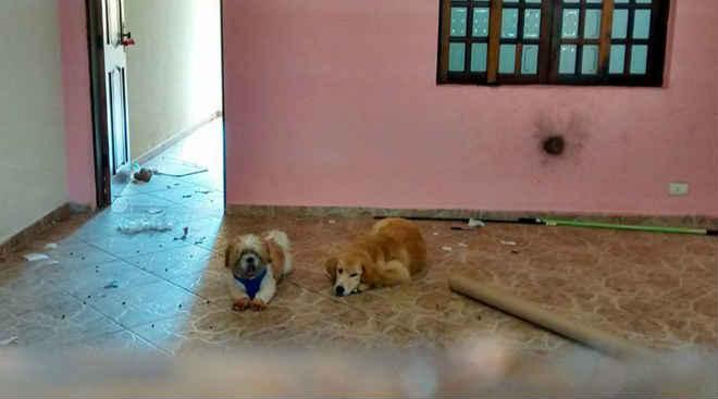 Família se muda e abandona cães em São Paulo
