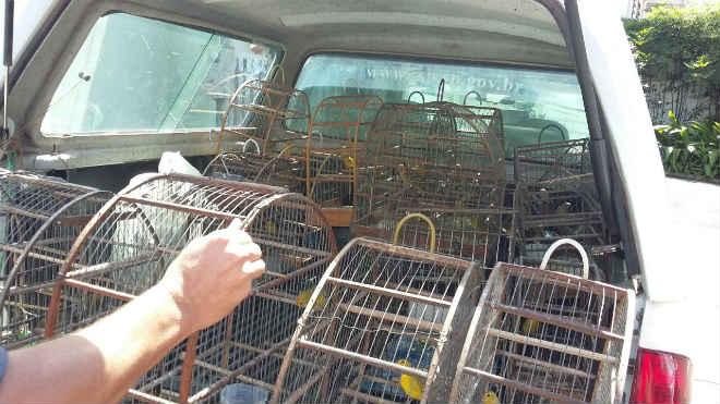 Homem é multado em R$ 126 mil por maus-tratos a aves em Pindorama, SP