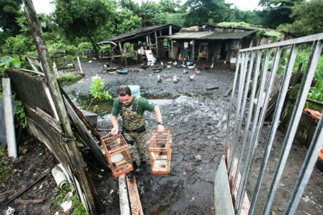 Criação ilegal de animais é desmantelada em Praia Grande, SP