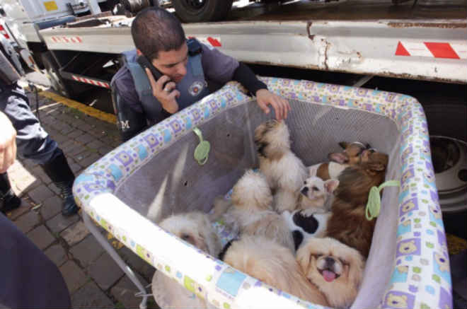 Cachorros são resgatados de carro em Ribeirão Preto, SP