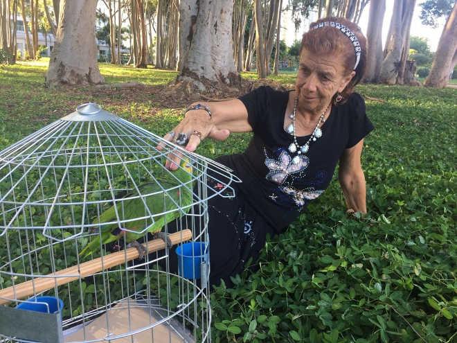 Após apreensão, Justiça manda devolver papagaio de estimação à tutora em São José dos Campos, SP
