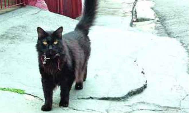 Polícia Civil encerra caso do 'maníaco dos gatos' da Vl.Palmares em Santo André, SP
