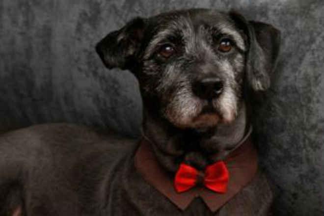 Após busca pela internet, família de Santos (SP) vence preconceito e adota cão adulto