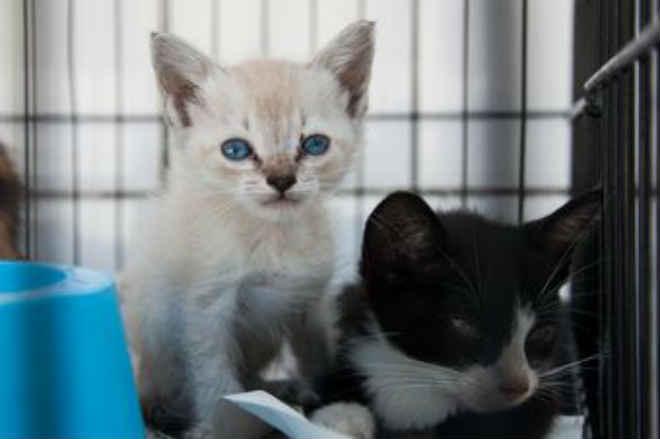 De quatro a seis filhotes de cães e gatos são abandonados em São Vicente, SP