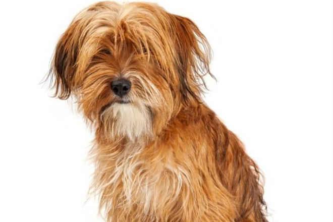 Shopping de SP promove feira de adoção de cachorros