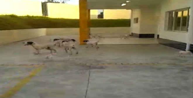 Cães são abandonados na porta de creche em Sorocaba, SP