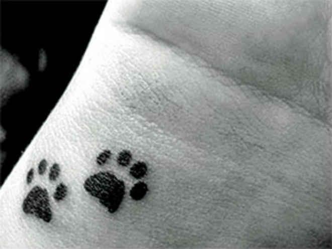 """Campanha """"Tattoo Animal"""" troca ração por tatuagem em Taubaté, SP"""