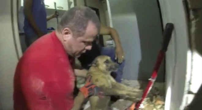 Bombeiros resgatam cachorra dentro de tubulação de água em Valinhos, SP