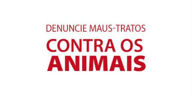 Prefeitura de Vinhedo (SP) cria e-mail específico para denúncia de maus tratos contra animais