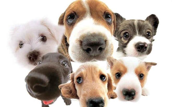 Guarujá (SP) terá feira de adoção de animais nesta sexta-feira (7)