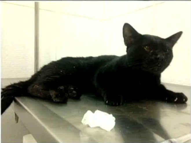 Vizinhos se mobilizam para salvar gato em prédio de SP