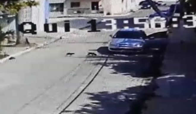 Vídeo: mulher abandona cachorros e atropela um deles em Maceió, AL