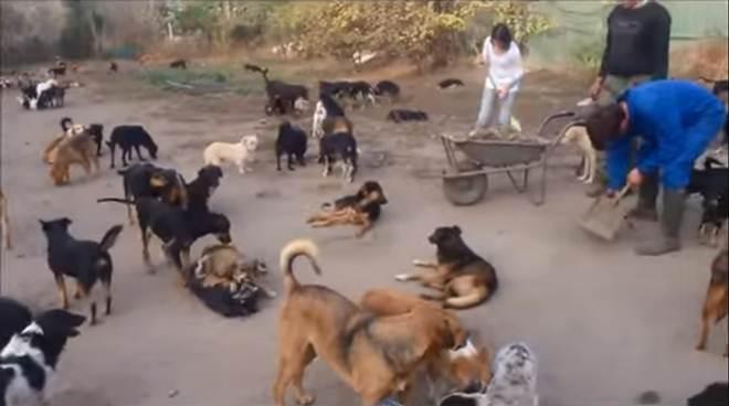 Homem constrói santuário e abriga 450 cachorros de rua para dar amor e atenção a todos eles