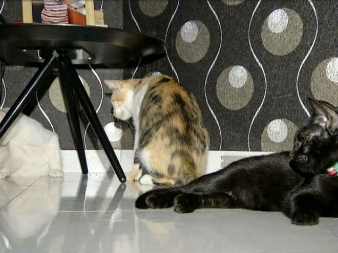 Família adapta casa para acolher 40 gatos resgatados das ruas em Palmas, TO