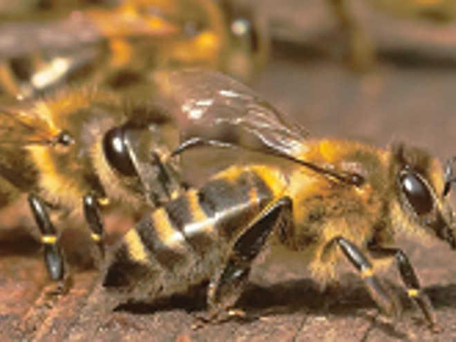 Fortaleza (CE) recebe ordem de queima em colmeia de abelhas na 12º DP da capital