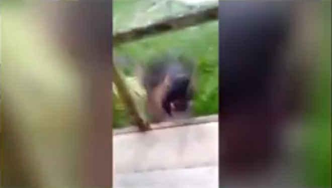 Estudantes denunciam professor por agressão a cachorro em escola em Salvador, BA; vídeo