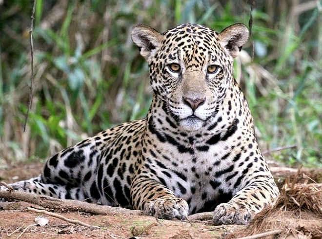 Deputado nega, mas quer legalizar a caça no país, denunciam ambientalistas