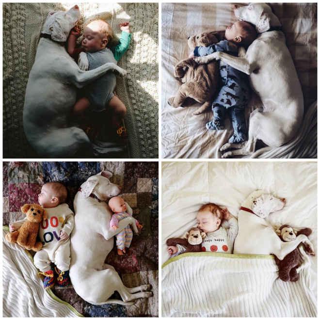 Cadela resgatada forma laço 'inquebrável' com bebê de 11 meses