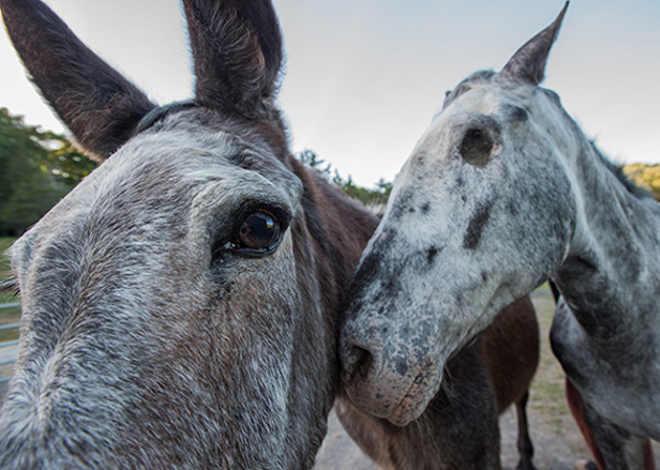 Fotojornalista capta animais que foram vítimas de abuso em série tocante e poderosa