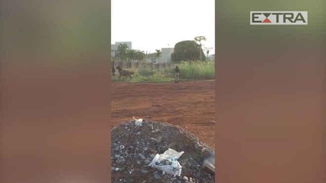 OAB segue 'com perplexidade' apuração sobre abate de cavalos por PRF em Goiás