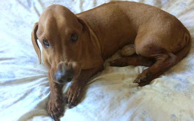 Após tratamento, cão resgatado com doença grave melhora e se alimenta sozinho