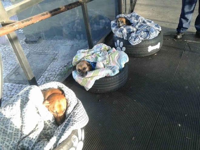 Três cachorros de rua são adotados em terminal de ônibus, em Curitiba, PR