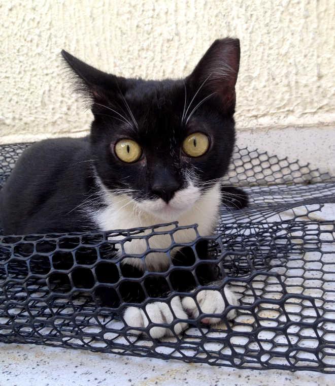 Projeto Frajola esteriliza 973 gatos em um ano na cidade de Aracaju, SE