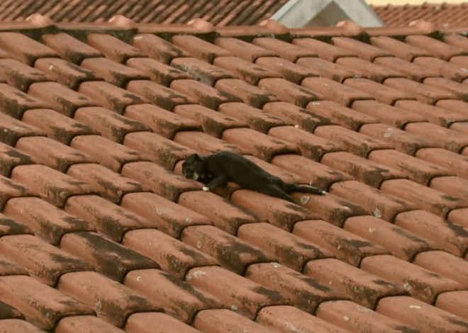 Animais mortos são arremessados em telhados de casas em São Carlos, SP