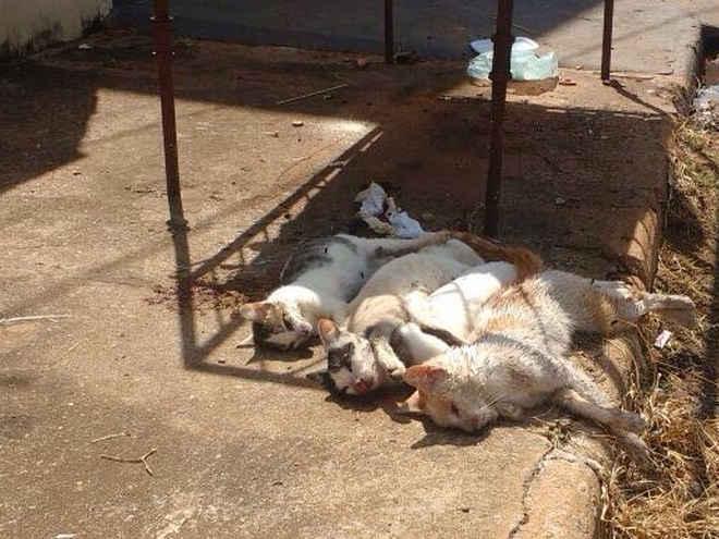 Gatos são encontrados mortos e moradores suspeitam de envenenamento